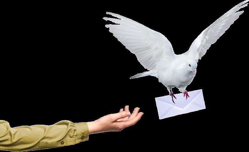 Hånd med brevdue